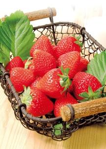 〈山形の極み〉山形県産 深瀬さんの完熟紅ほっぺいちご