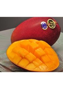 【4/23~発送】宮崎県産・完熟マンゴー「太陽のタマゴ」 約900g(化粧箱入り、 2~3玉)